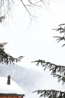 Foto vertical de galhos de pinheiros cobertos de neve