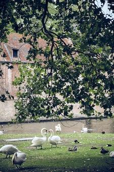 Foto vertical de gansos e patos perto de um lago em um parque