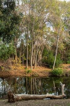 Foto vertical de longas árvores à frente de um pequeno riacho