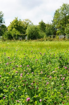 Foto vertical de pequenas flores silvestres roxas crescendo no campo ensolarado