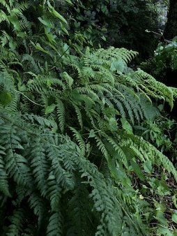 Foto vertical de plantas verdes crescendo na floresta