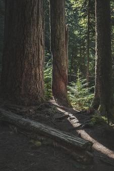 Foto vertical de troncos de árvores e pequenas coníferas em uma floresta