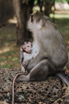 Foto vertical de um adorável bebê macaco nos braços da mãe