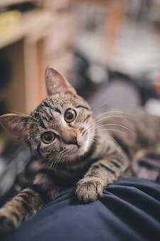 Foto vertical de um adorável gato doméstico listrado deitado sobre um cobertor com um fundo desfocado