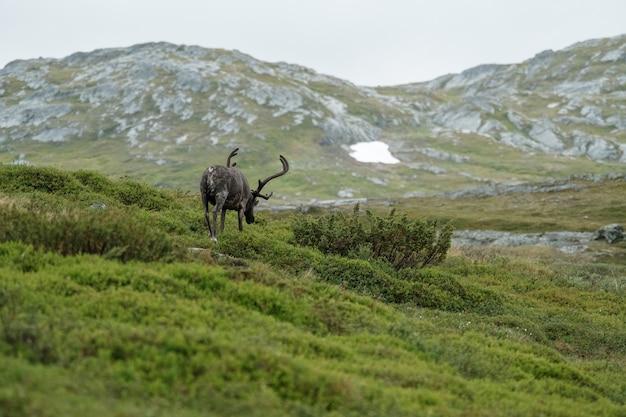 Foto vertical de um alce pastando em uma paisagem montanhosa