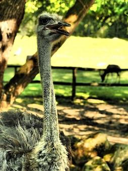 Foto vertical de um avestruz cinza em um parque durante o dia
