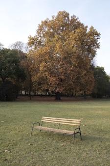 Foto vertical de um banco no parque atrás de uma árvore