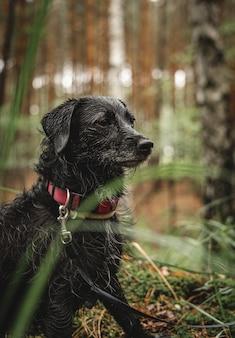 Foto vertical de um border terrier fofo em uma floresta durante o dia