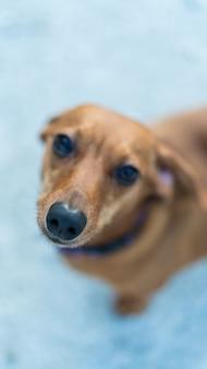 Foto vertical de um cachorro adorável olhando para a frente