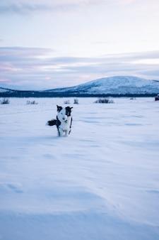Foto vertical de um cachorro fofo andando em um campo nevado no norte da suécia