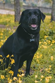 Foto vertical de um cachorro fofo e feliz sentado no chão perto de flores amarelas