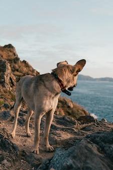 Foto vertical de um cachorro fofo parado em uma praia rochosa