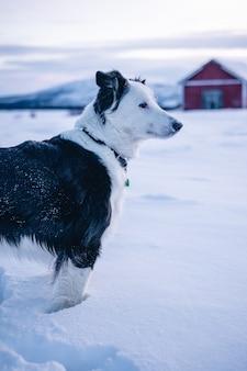 Foto vertical de um cachorro fofo parado na neve no norte da suécia