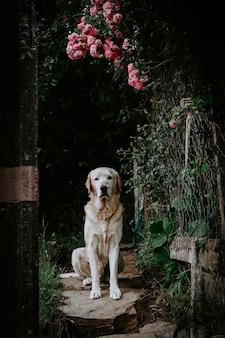Foto vertical de um cachorro fofo sentado sob flores cor de rosa com um fundo desfocado