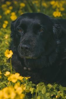 Foto vertical de um cachorro preto parado em um campo de flores amarelas