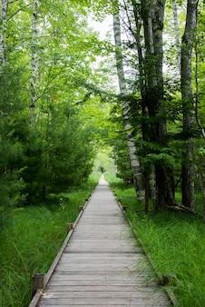 Foto vertical de um caminho de madeira artificial na floresta com grama verde brilhante e árvores nas laterais