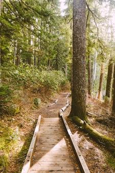 Foto vertical de um caminho de madeira em uma floresta
