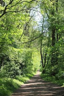 Foto vertical de um caminho em uma floresta cercada por muitas árvores verdes