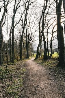 Foto vertical de um caminho estreito cercado por árvores altas e sem folhas