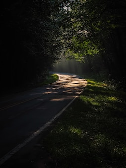 Foto vertical de um caminho estreito em uma floresta cercada por muitas árvores verdes