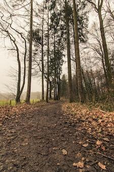 Foto vertical de um caminho na floresta com um céu sombrio