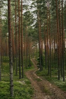 Foto vertical de um caminho na floresta de abetos