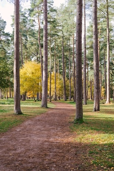 Foto vertical de um caminho no meio das árvores altas de uma floresta