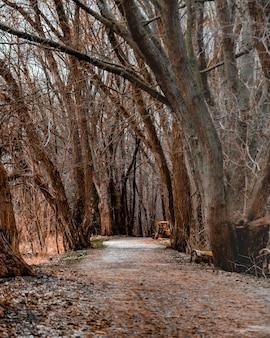 Foto vertical de um caminho no meio de uma floresta com árvores sem folhas