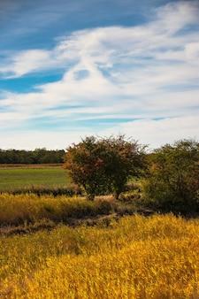 Foto vertical de um campo com árvores e um céu azul