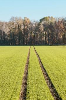 Foto vertical de um campo levando a uma floresta durante o dia