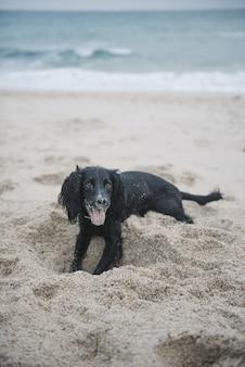 Foto vertical de um cão spaniel preto fofo brincando com areia na praia