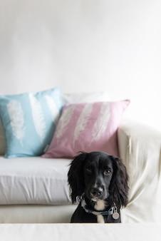 Foto vertical de um cão spaniel preto fofo sentado perto de um sofá perto da mesa
