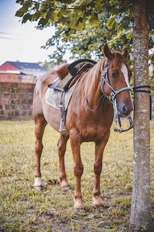 Foto vertical de um cavalo amarrado a uma árvore com uma sela