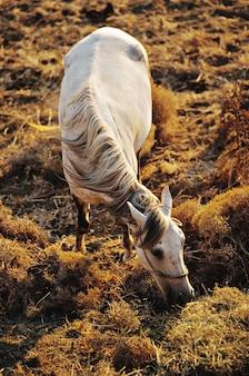 Foto vertical de um cavalo branco pastando em um campo gramado