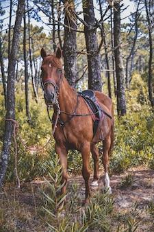 Foto vertical de um cavalo com uma sela olhando para a câmera