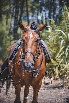 Foto vertical de um cavalo com uma sela