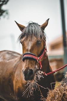 Foto vertical de um cavalo comendo feno