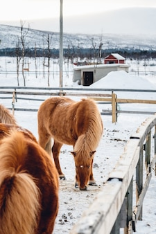 Foto vertical de um cavalo em uma fazenda cercada por uma cerca de madeira em um dia de neve