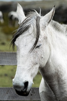 Foto vertical de um cavalo mustang branco com os olhos fechados