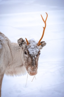 Foto vertical de um cervo com um chifre e um fundo de neve