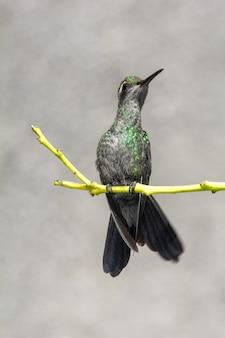 Foto vertical de um colibri empoleirado em um galho de árvore