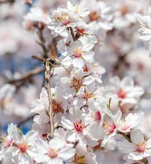 Foto vertical de um colibri voando perto das flores de sakura