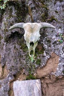 Foto vertical de um crânio de animal pendurado em uma parede de pedra desgastada