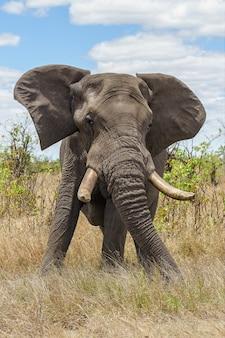 Foto vertical de um elefante parado em um campo gramado