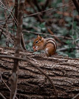 Foto vertical de um esquilo bebê em uma árvore enquanto come