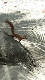 Foto vertical de um esquilo em uma árvore na praia