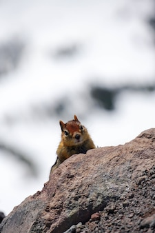 Foto vertical de um esquilo em uma rocha