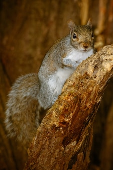 Foto vertical de um esquilo fofo em uma árvore