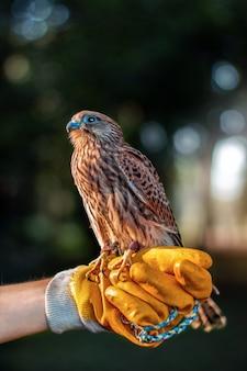 Foto vertical de um falcão na mão de uma pessoa