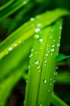 Foto vertical de um galho verde com gotas de chuva